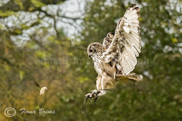 WoW october x2-1a - Birds of Prey