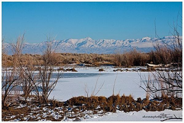 Frozen Desert Pond - Nevada (mostly) Landscapes