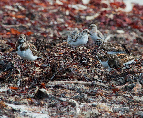 Balranald Bird Reserve - Scottish Highlands