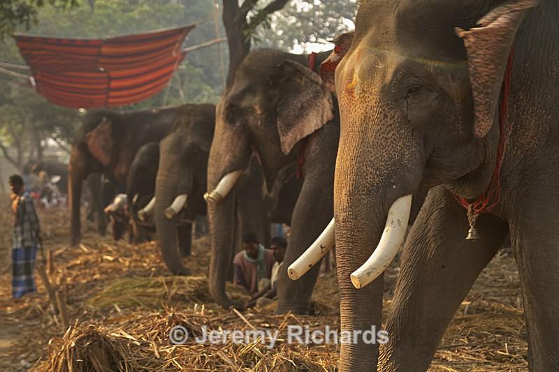 Elephant Market - India