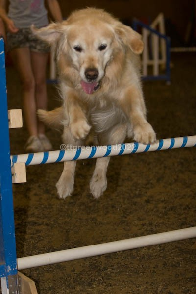 Draft-8284 - Canine Action