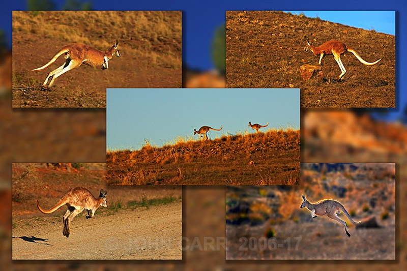 Red Roo Quintych - MONTAGES