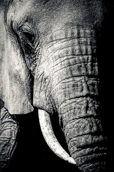 Kenya, Elephant