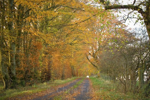 Morton Lane in Autumn - Around Thornhill