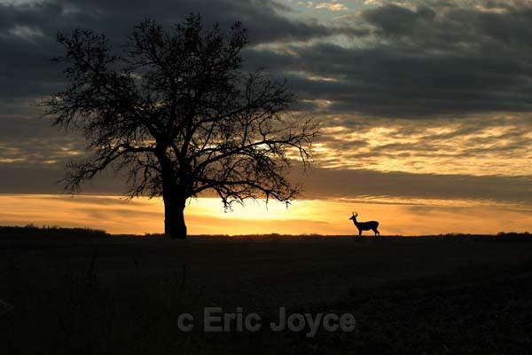 Lucky Buck - Nature