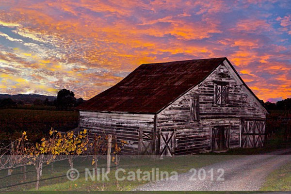 Vineyard Barn Sunset - Landscapes