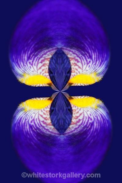 Iris Lantern - Digital Art