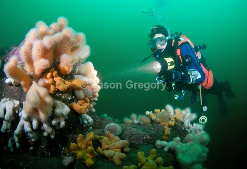 Diver observes reef 2 - Diver exploring marine environment