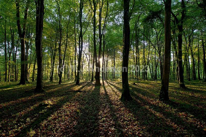 Donadea Forest Light - Co.Kildare.