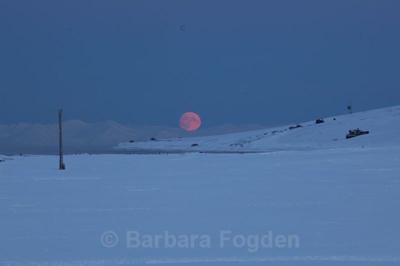 Moon in Hiorthamn - The daylight returns