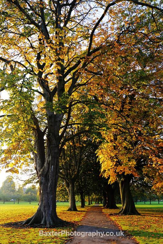 Avenue Of Trees In Autumn - Harrogate Town