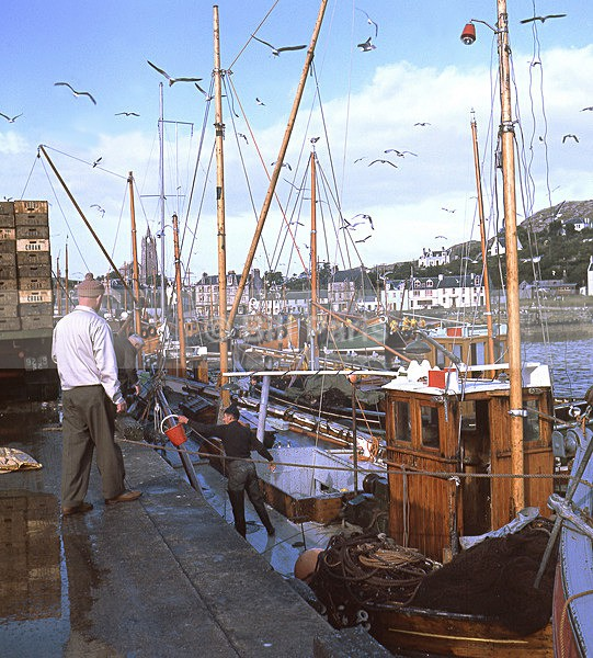 Fishing Boats Tarbert Loch Fyne - Land and Sea