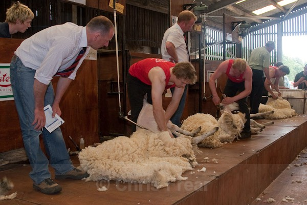 22 - Shearing Competition