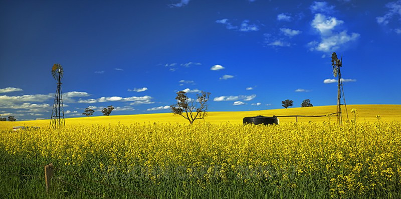 Country Canola-8358_6_7 HDR - COUNTRY SCENES PHOTOS