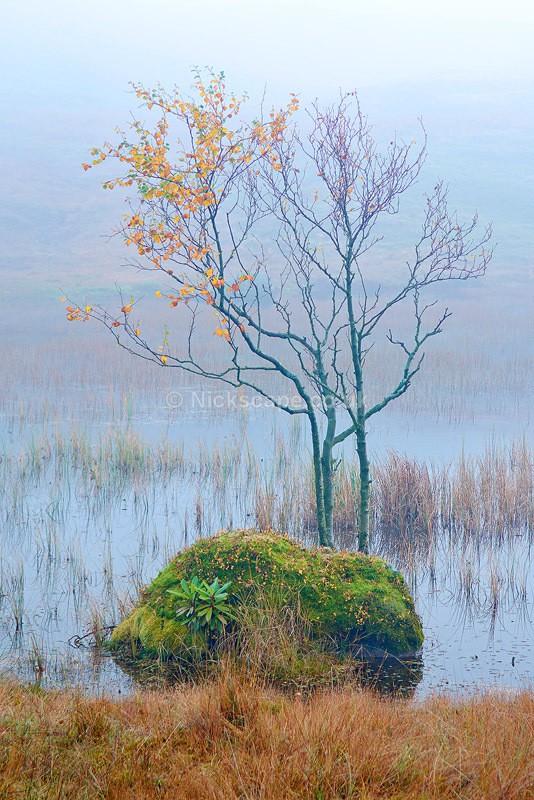 Autumn at Kelly Hall Tarn - Lake District, UK - Lake District National Park