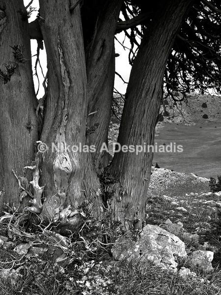 Κορμός Ι Trunk - Δέντρα Ι Trees