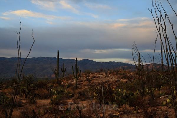 Desert Autumn - Tuscon, Arizona