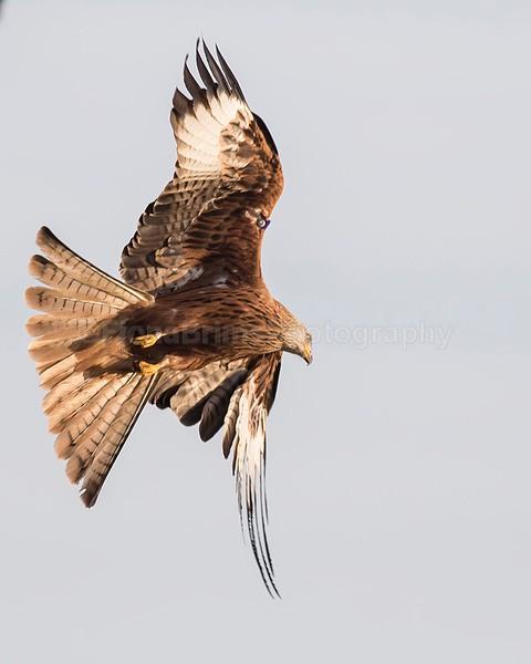 argaty jan -142 - Birds of Prey