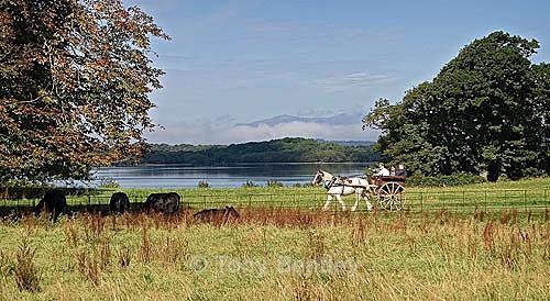 Jaunting Cart, Kilarney National Park - Ireland
