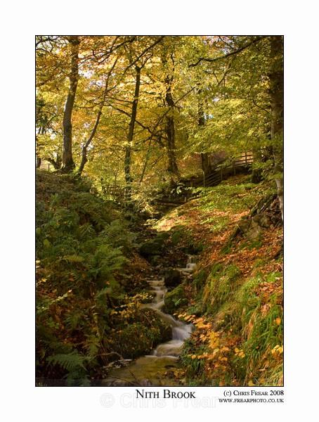 Nith Brook - Traditional Landscapes