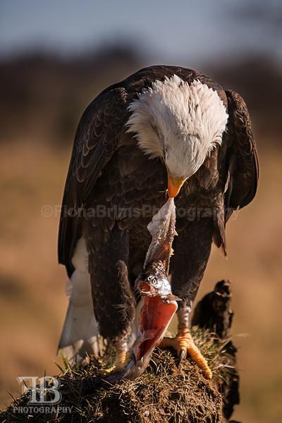 wow march 16 Photo day-49 - Birds of Prey
