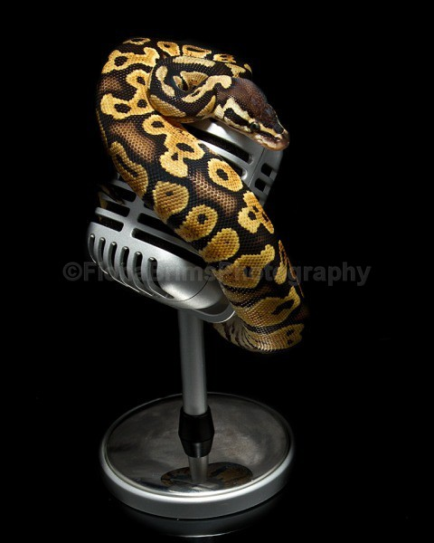 snakies-27 - Reptile Photography