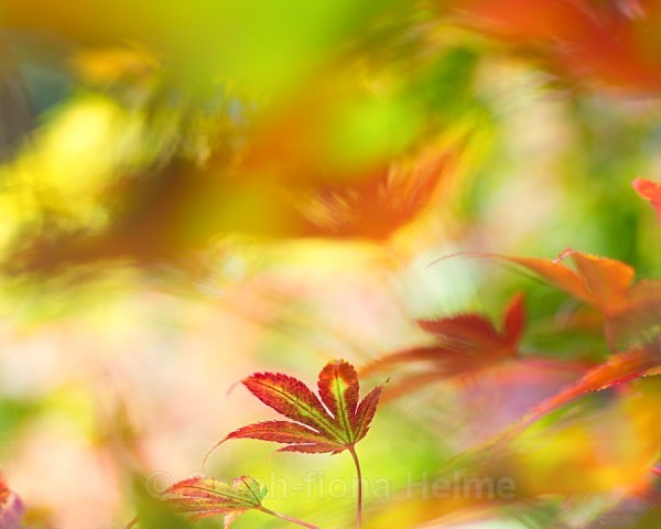 Autumn Palette - Arboreal Beauty