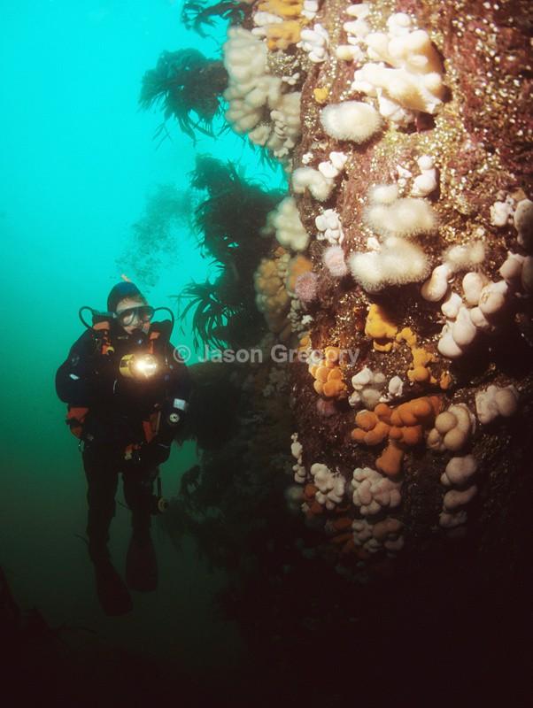 Diver observes wall reef 2 - Diver exploring marine environment