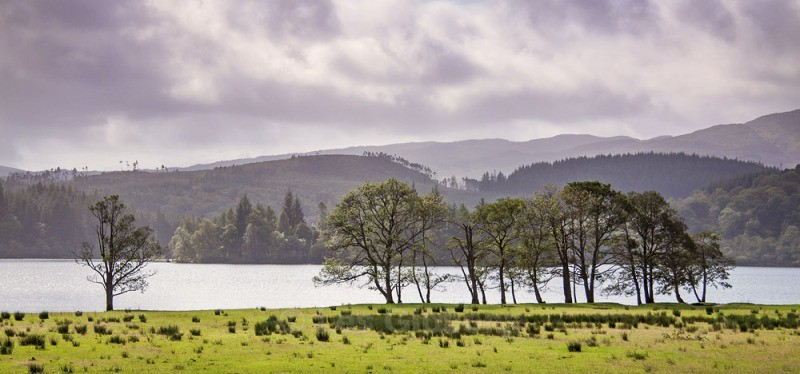 Loch Ard trees - Stirling and the Trossachs