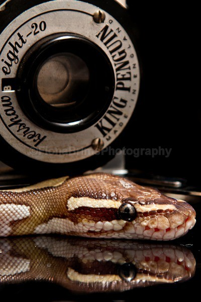 snakes-11 - Reptile Photography