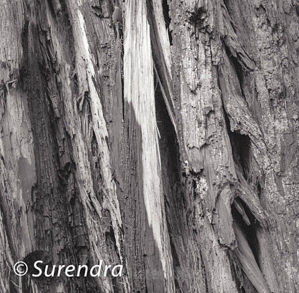 Bark 44 - Bark 2
