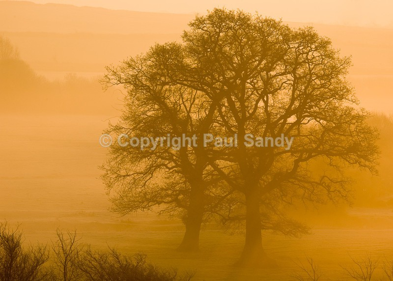 Culm valley morning - Seeing the Wood AND the Trees