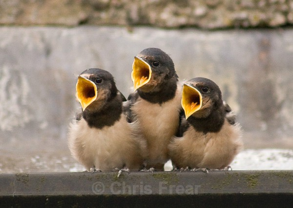 Frear-Trio - For T&C