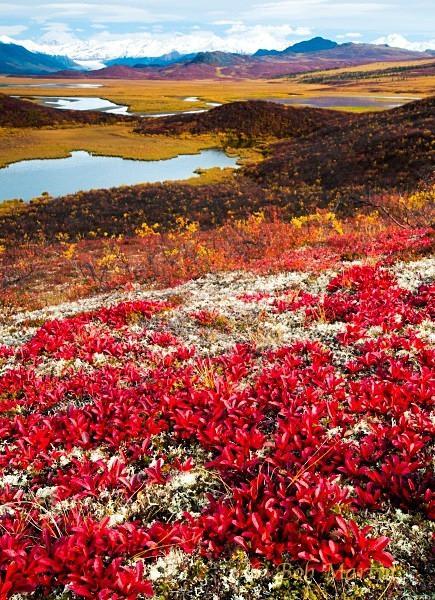 Fall Scene (Maclaren River, Alaska) - New Additions