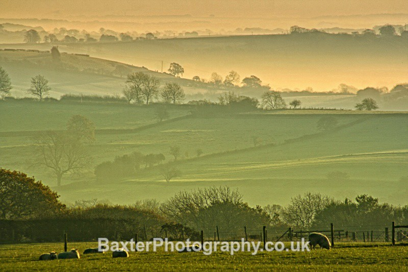 Grazing In The Mist - Views Around Harrogate: