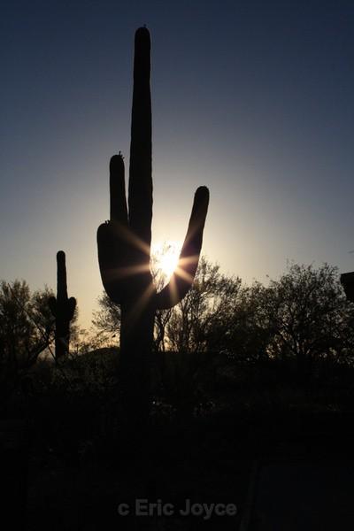 Saguaro sun flare - Tuscon, Arizona
