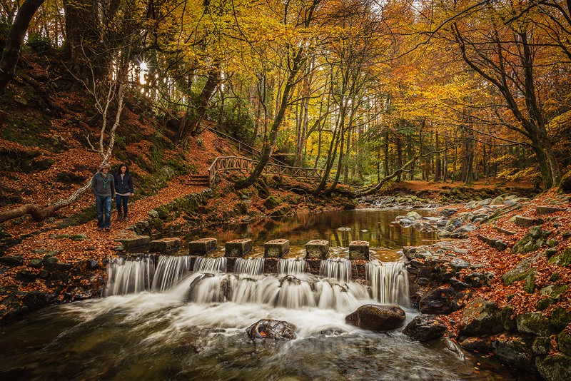 Autumn Stepping Stones