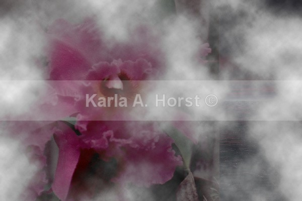 Orchid in the Mist - Graphic Design