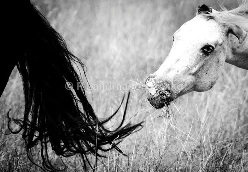 - Horse