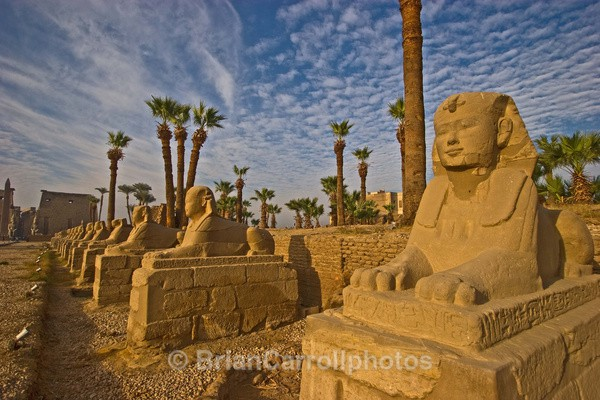 Avenue of Sphinxes leading to Luxor Temple - Egypt Nile Tour 08