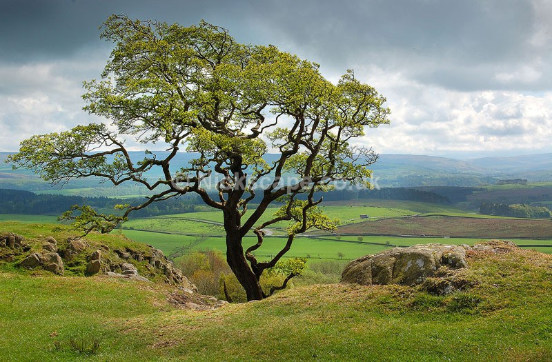Walltown - Hadrians Wall - Northumberland