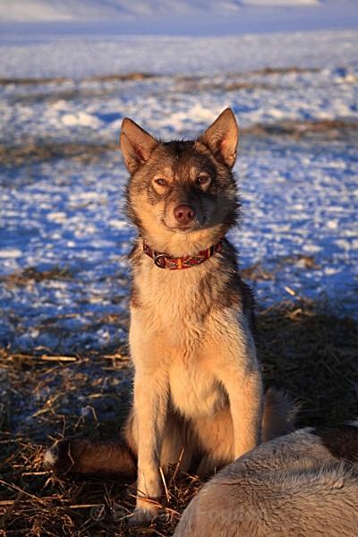 Husky 9494 - Winter in the daylight