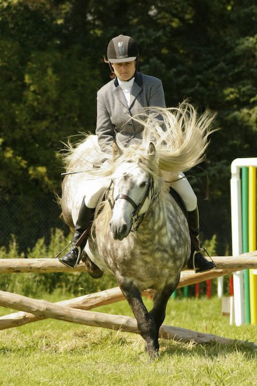 10 - Equestrian Photography
