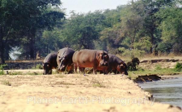 Island Hippos 2 - Around The World
