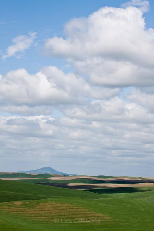 fields 9 - Palouse