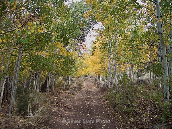 Fall in Smith Creek - Nevada (mostly) Landscapes