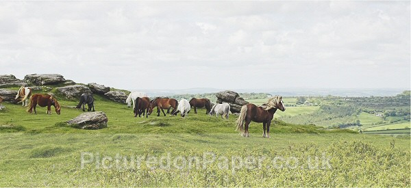 Hill Fort - Horses and Ponies
