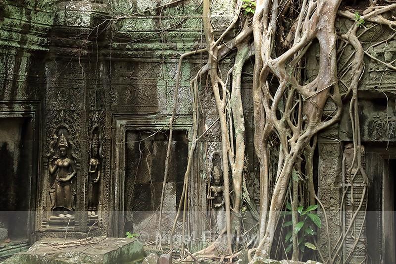 Tree roots at Ta Prohm temple, Siem Reap, Cambodia - Cambodia
