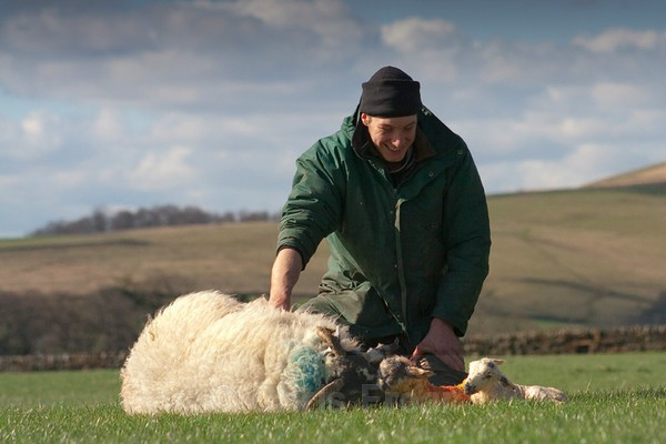 Frear-Lambing - For T&C