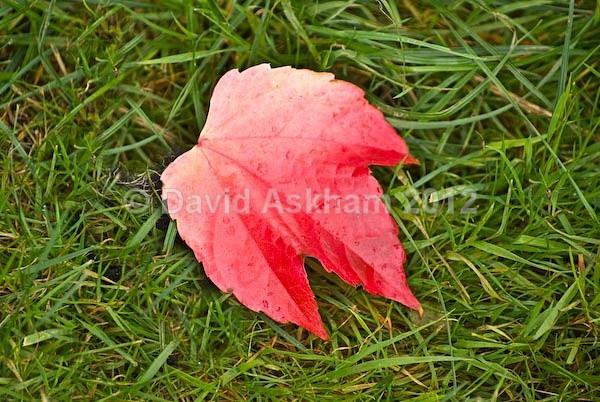 Lone leaf - Autumn